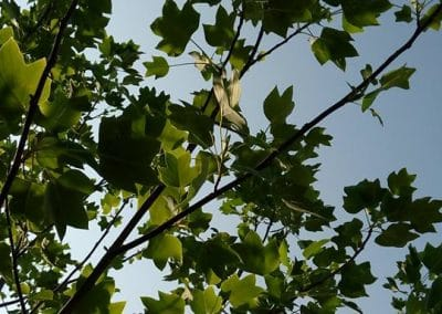 Shirokolistna-rastitelnost-15