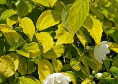Shirokolistna-rastitelnost-2